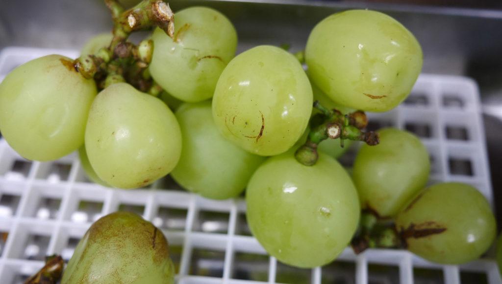 Katta Kurgan grapes